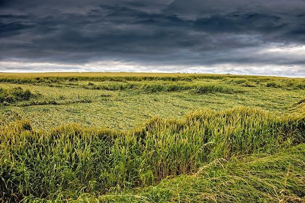 Zamarł handel gruntami rolnymi /©123RF/PICSEL