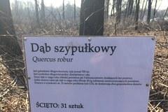 Zamieszanie z wycinką w Katowicach. Ścięto drzewa należące do miasta