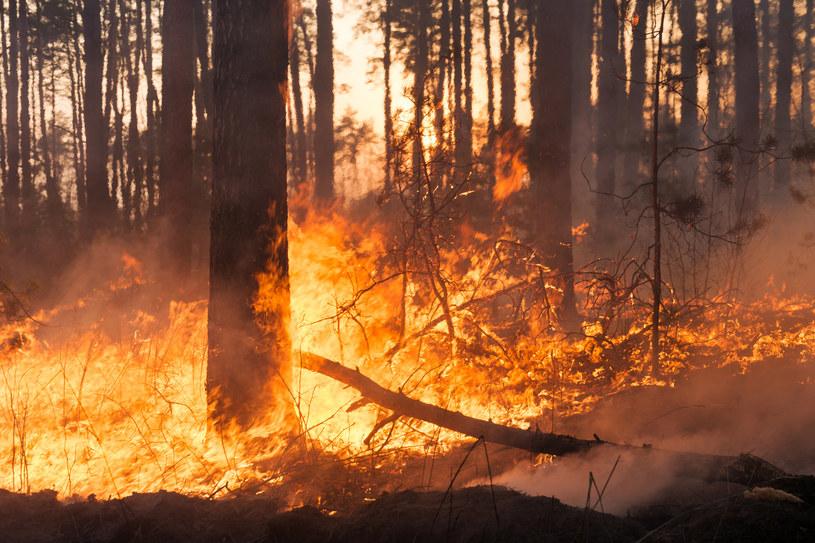 Zanieczyszczenie obecne w dymie może się przenosić nawet na odległość 1000 km /123RF/PICSEL