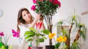 Zanim wyjedziesz na urlop, zadbaj o nawilżenie swoich kwiatów