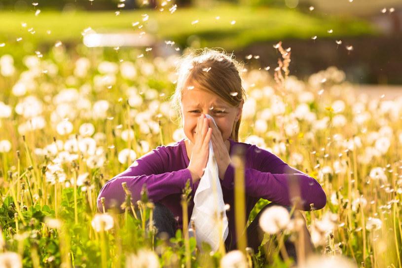 Zanim zaplanujesz urlop, starannie przejrzyj kalendarz pyleń roślin /123RF/PICSEL
