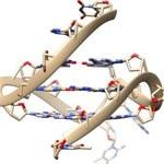 Zaobserwowano rzadkie, czteroniciowe DNA w żywych komórkach