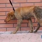Zaostrzenie zarzutów dla matki i córki, które bestialsko chciały zabić psa