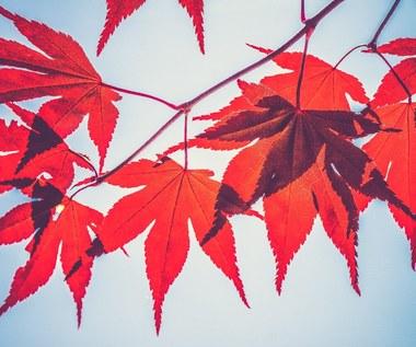 Zapach jako sposób na jesienną chandrę