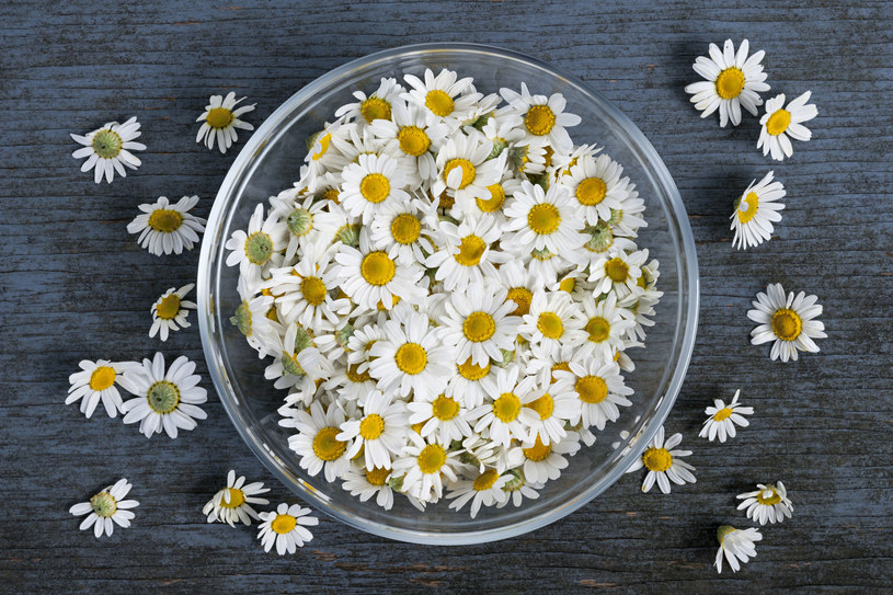 Zapach rumianku, melisy i lawendy ukoi twoje nerwy /123RF/PICSEL