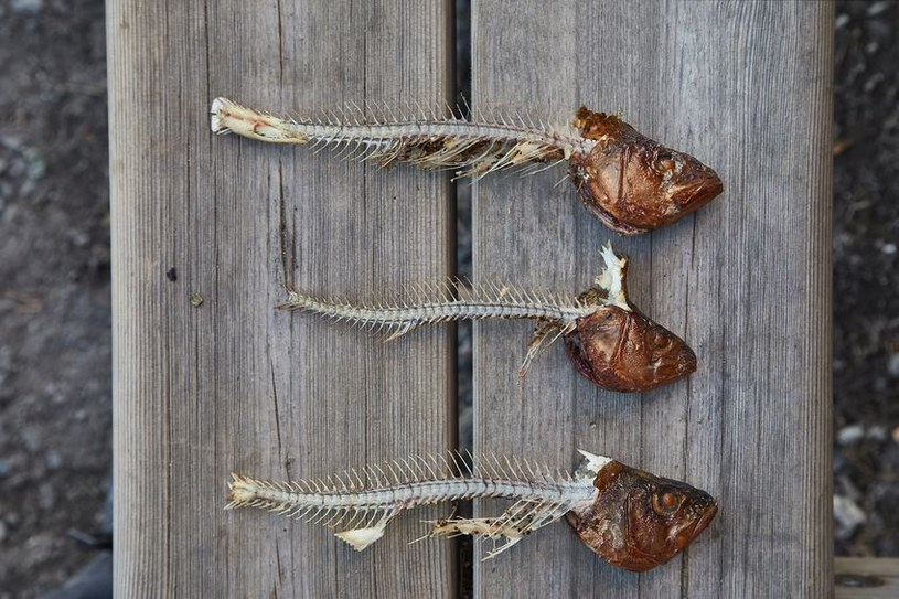 Zapach ryby odstraszy kreta /©123RF/PICSEL