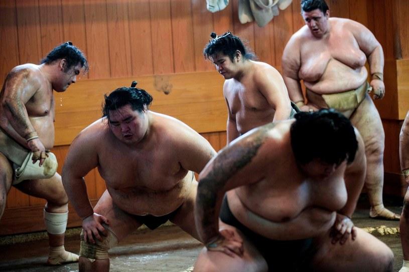 Zapaśnicy sumo /Ursula Hyzy /AFP