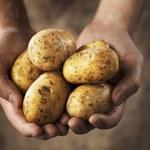 Zapłacisz 10 tysięcy złotych za kilogram ziemniaków?