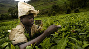Zaplanuj podróż do Rwandy