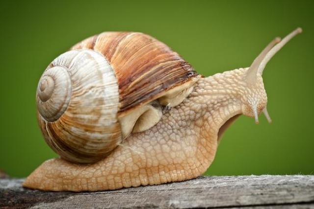 Zapobiega ślimakom /© Photogenica