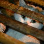 Zarabiają maltretując zwierzęta. Możesz im przeszkodzić!