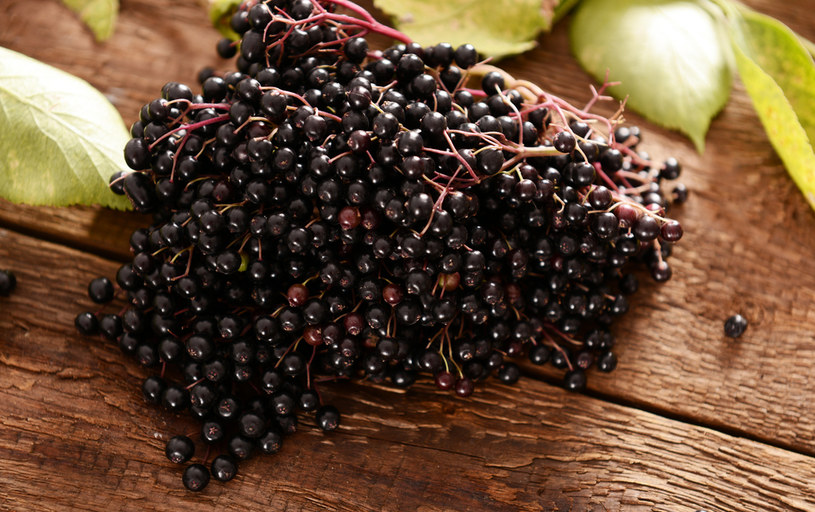 Zarówno kwiaty, jak i owoce czarnego bzu są chętnie wykorzystywane w medycynie ludowej /123RF/PICSEL