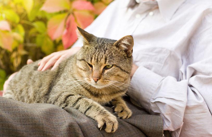 Zasady felinoterapii /©123RF/PICSEL