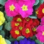 Zasadzisz kwiatki na balkonie, dostaniesz ulgę podatkową