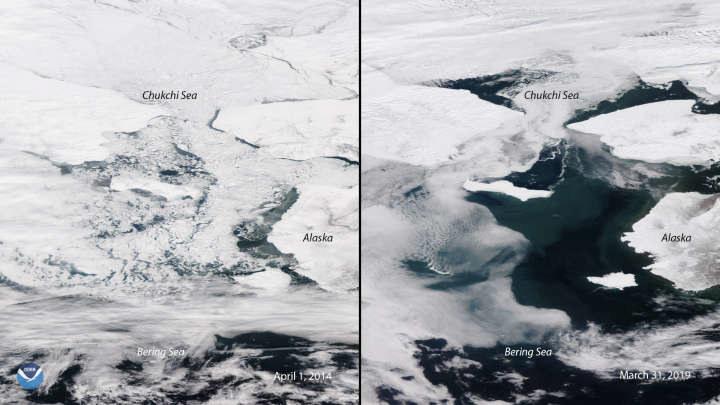 Zasięg pokrywy lodowej jest najniższy w historii - po lewej zdjęcie z 2014 r., a po prawej z 2019 r. /materiały prasowe