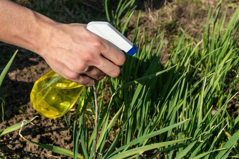 Zastąp chemiczne preparaty naturalnymi środkami /©123RF/PICSEL