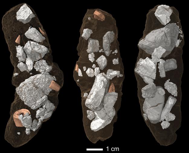 Zawartość koprolitów, skamieniałych odchodów Smoka wawelskiego /Martin Qvarnström /