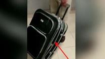 Zawartość tej walizki mocno was zdziwi!