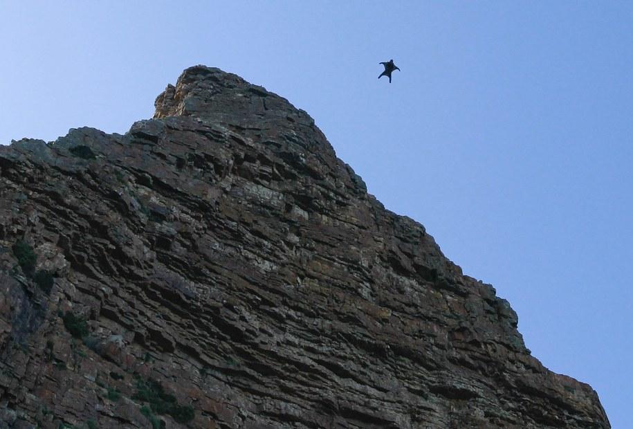 Zawodnik uprawiający wingsuit /NIC BOTHMA /PAP/EPA