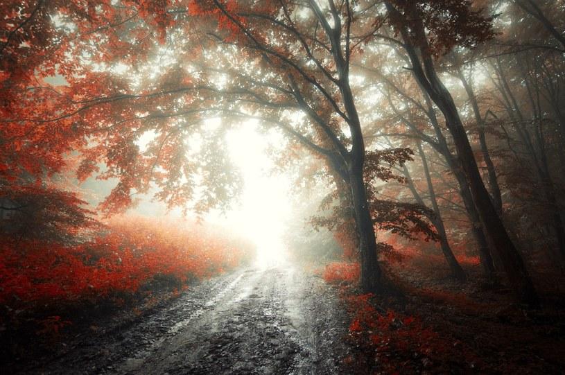 Zbliża się jesień /123RF/PICSEL