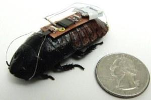 Zdalnie sterowany karaluch