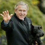 Zdechł ulubiony pies byłego prezydenta George'a W. Busha