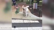Zdeterminowany psiak potrzebował pomocy podczas ważnej misji
