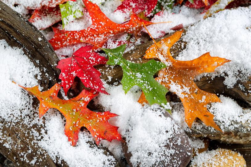 zdj. ilustracyjne /Tom Baker /123RF/PICSEL