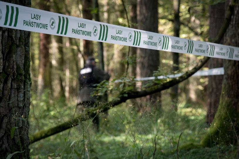 zakazy wstępu do lasów