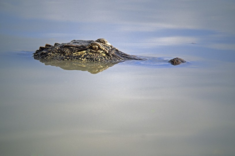 zdj. ilustracyjne /UIG Nature Environment/Wild Horizons /East News