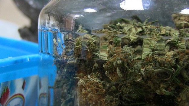 Brytyjskie MSW dopuszcza użycie medycznej marihuany
