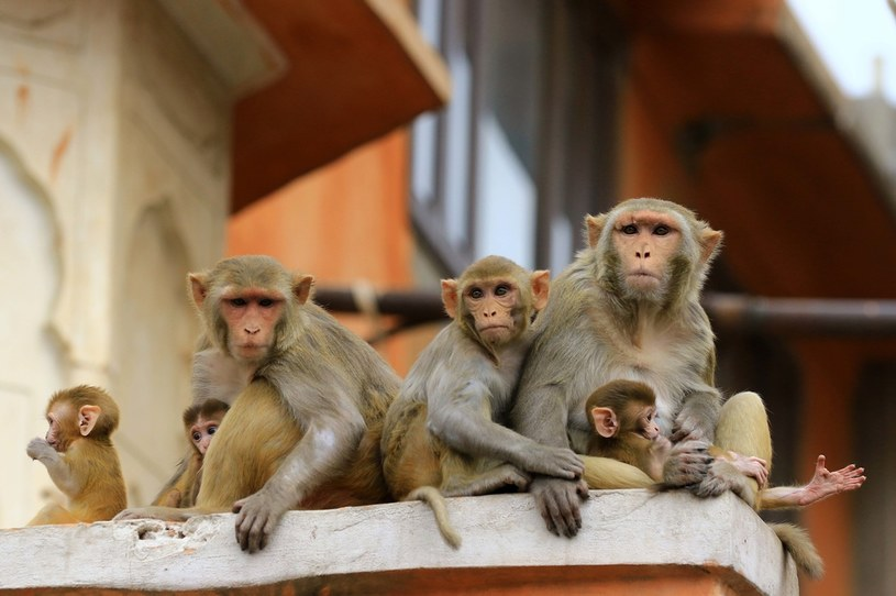 zdj. ilustracyjne /Vishal Bhatnagar/NurPhoto /Getty Images