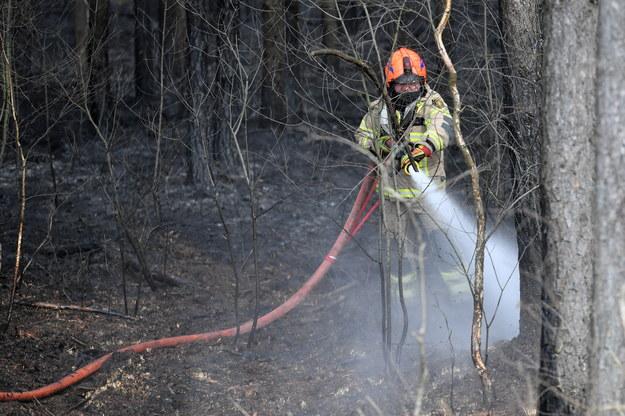 Zdj. z niedzieli - strażacy dogaszają pożar, do którego doszło na łące znajdującej się w pobliżu lasu przy trasie S8 w okolicach Zielonki pod Warszawą /Piotr Nowak /PAP