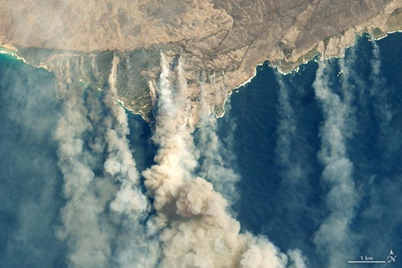 Zdjęcia satelitarne Wyspy Kangura opublikowane przez NASA /NASA Earth Observatory /PAP/EPA