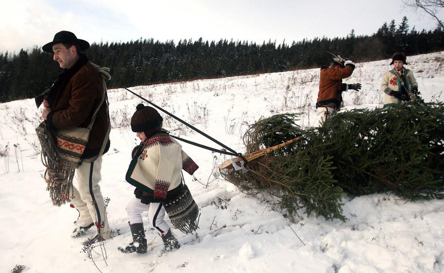Zdjęcie ilustracyjne. Góral Marcin Zubek z synami wraca do domu z choinkami, grudzień 2009 / Grzegorz Momot    /PAP