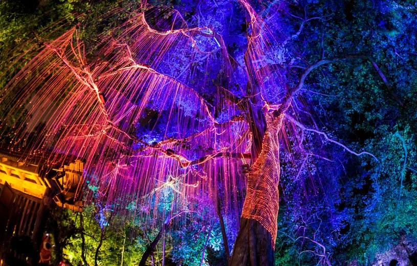 Zdjęcie ilustracyjne - Światło fluorescencyjne pod ciemnym drzewem /123RF/PICSEL