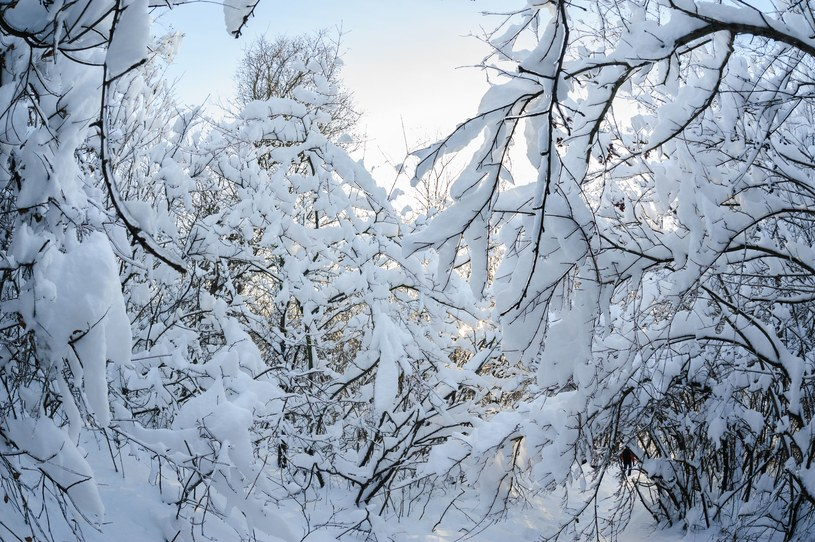 Zdjęcie ilustracyjne /123RF/PICSEL