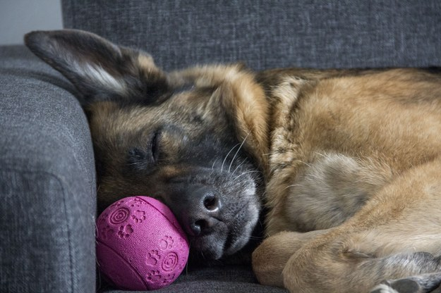 """Pies śmiertelną ofiarą koronawirusa. """"Miał wolę życia. Nie chciał odejść"""""""