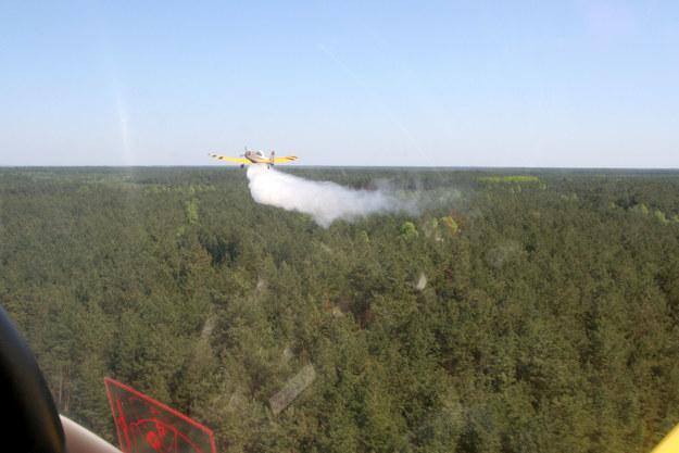 """Pożar lasów pod Warszawą. """"Trochę ich teraz będzie"""""""