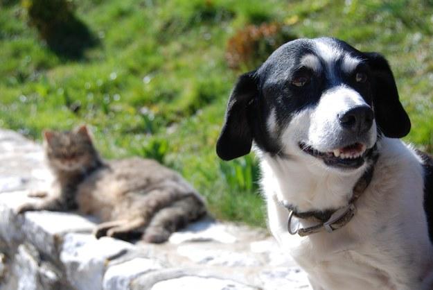 Czy Covid-19 jest groźny dla psów i kotów?