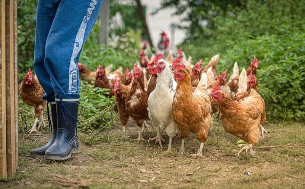 Pierwsze na świecie zakażenie człowieka ptasią grypą H10N3