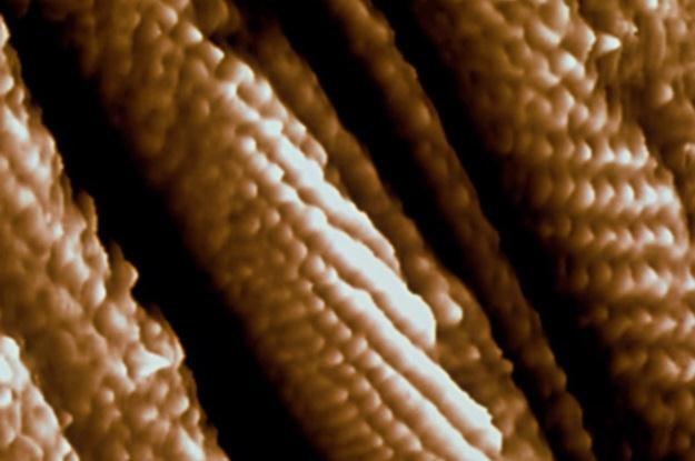Zdjęcie nanorurek węglowych zrobione skaningowym mikroskopem elektronowym /IBM.com