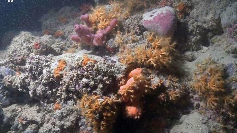Zdjęcie nowo odkrytej rafy koralowej /materiały prasowe