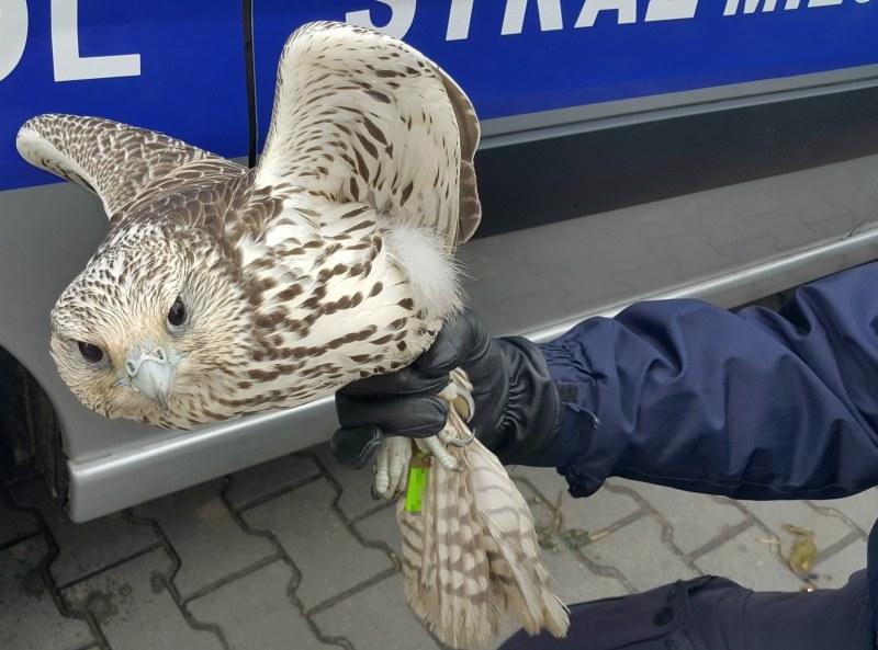 Zdjęcie pochodzi ze strony warszawskiej straży miejskiej /