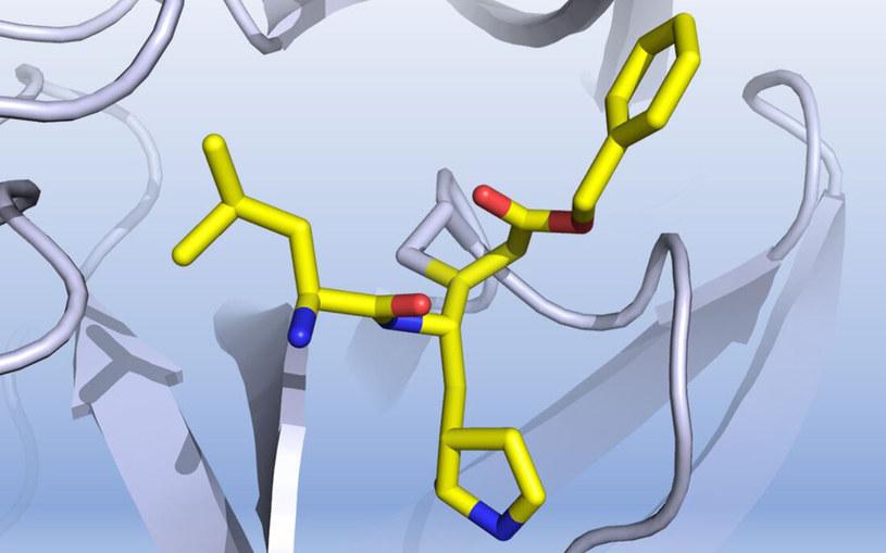 Zdjęcie prezentuje, jak nowo odkryty związek może hamować enzym koronawirusa /materiały prasowe