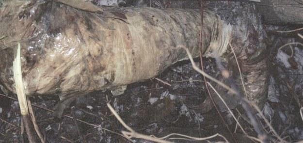Zdjęcie protezy znalezionej nad Wisłą /RMF FM