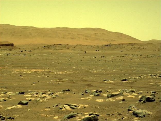 Zdjęcie udostępnione przez NASA i zrobione z łazika Perseverance pokazuje śmigłowiec NASA Ingenuity Mars, podczas pierwszego lotu testowego /NASA/JPL-Caltech HANDOUT /PAP/EPA