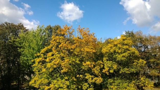 Zdjęcie wykonane smartfonem Nokia Lumia 1020 /INTERIA.PL