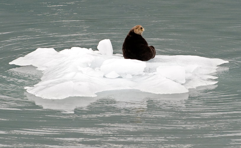 Zdjęcie wykonane w Whittier, mieście w najdalszym punkcie fiordu w Zatoce Księcia Williama /AFP