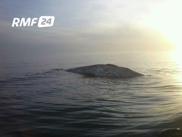 Zdjęcie z Gorącej Linii RMF FM /RMF FM